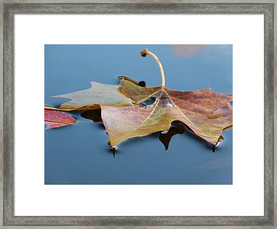Fall Reflections Framed Print by Jane Ford