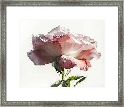 Fall Rose Framed Print by Camille Lopez