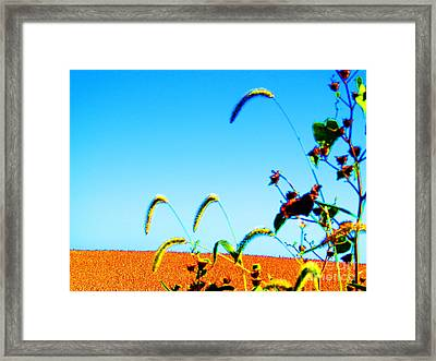 Fall Skies On Soybeans Farm Framed Print by Tina M Wenger