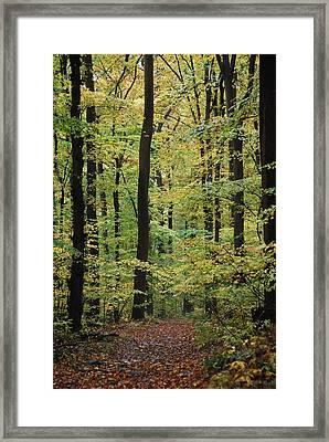 Fall Trail Framed Print by Judy Gallagher