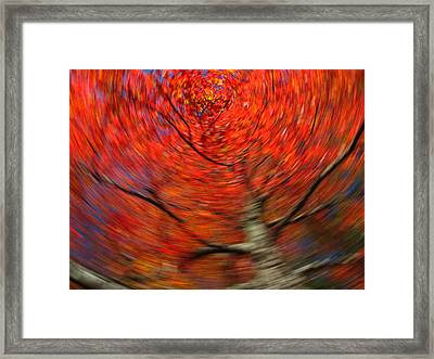 Fall Tree Carousel Framed Print by Juergen Roth