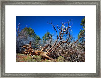 Fall Tree Framed Print by Ivete Basso Photography