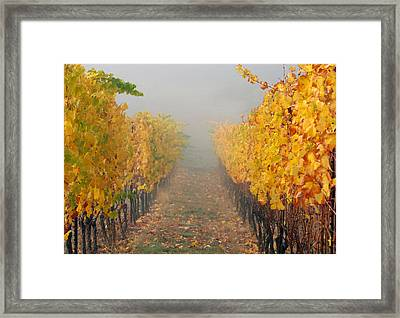 Fall Vines Framed Print by Jean Noren