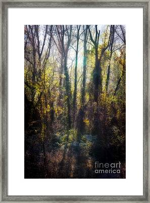 Fall01 Framed Print by Stefano Bertolucci