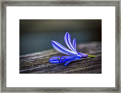 Fallen Beauty Framed Print by Marvin Spates