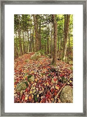 Fallen Color Framed Print by James Steele