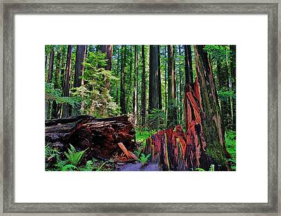 Fallen Giant Framed Print by Benjamin Yeager