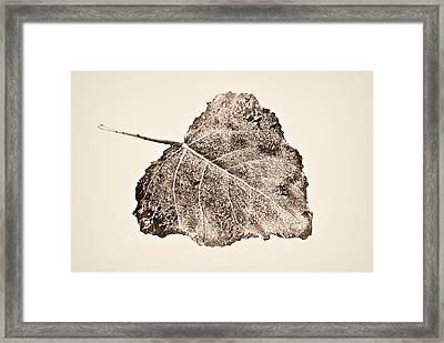 Fallen Leaf In Antique T Framed Print by Greg Jackson