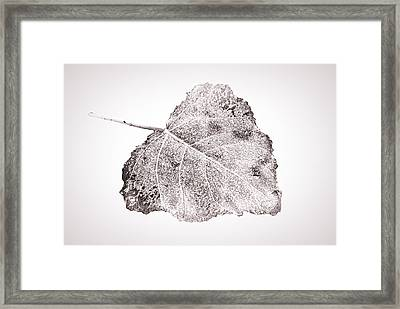 Fallen Leaf In Bwt Framed Print by Greg Jackson