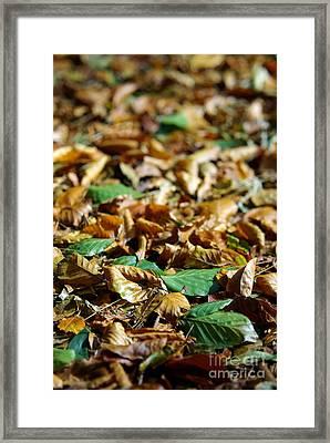 Fallen Leaves Framed Print by Carlos Caetano