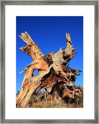 Fallen Framed Print by Shane Bechler