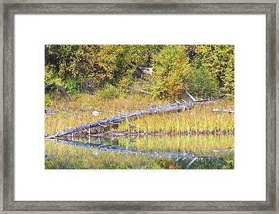 Fallen Timber  Framed Print by Sharon Talson