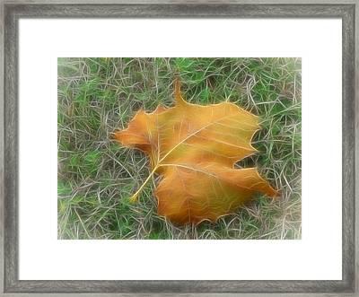 Fallen Framed Print by Wendy J St Christopher