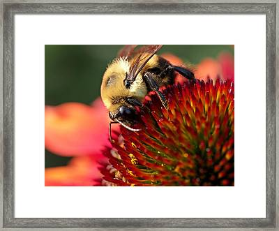 Falling For You Framed Print by Atchayot Rattanawan