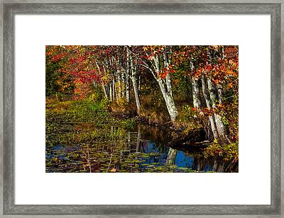 Falling Into The Colors Framed Print by Karol Livote