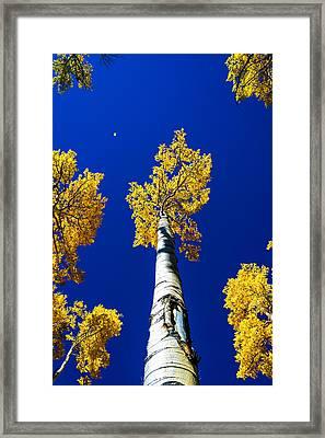 Falling Leaf Framed Print by Chad Dutson