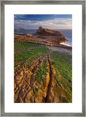 Falling Panther Beach Framed Print by Francesco Emanuele Carucci
