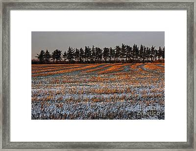 Falling To Winter Framed Print by Inge Riis McDonald