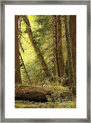 Falling Trees In The Rainforest Framed Print by Carol Groenen