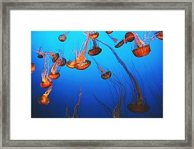 Falling Under Framed Print by Kerry Langel
