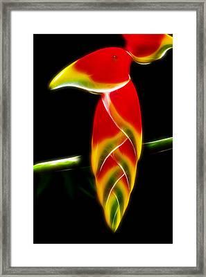 False Bird Of Paradise Framed Print by Carlos Vieira