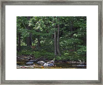 Family Discovery Framed Print by Skip Willits