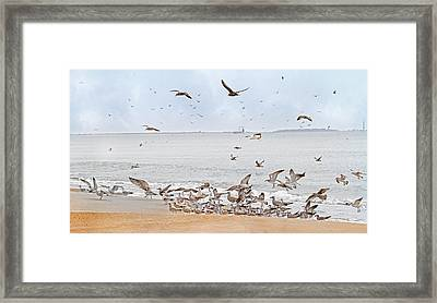 Family Flock  Framed Print by Betsy Knapp