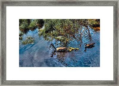 Family Of Geese On The Moose River Framed Print by David Patterson