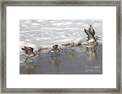 Family Stroll Framed Print by Bob Hislop