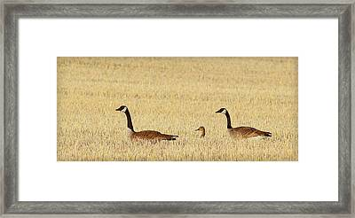 Family Vacation.. Framed Print by Al  Swasey