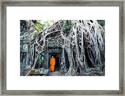 Famous Big Tree Inside Ta Phrom Temple - Angkor - Cambodia Framed Print by Matteo Colombo