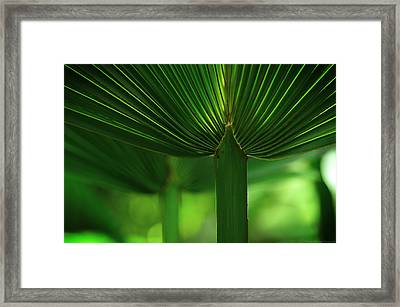 Fan Palm Framed Print by Philippe Meisburger