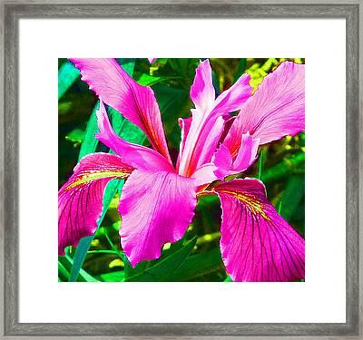 Fantasy Iris Framed Print by Margaret Saheed