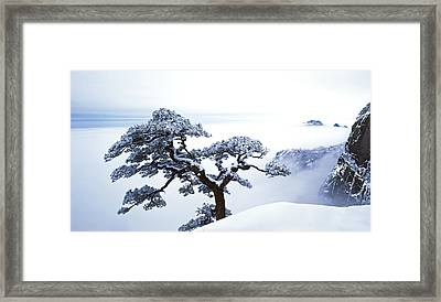 Fare-well Pine Tree Framed Print by King Wu