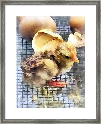 Farm Animals - Just Hatched Framed Print by Susan Savad