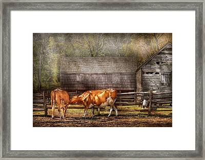 Farm - Cow - A Couple Of Cows Framed Print by Mike Savad