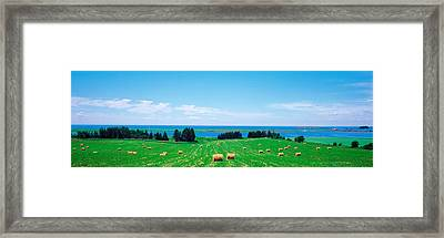 Farm Field Prince Isl Canada Framed Print by Panoramic Images