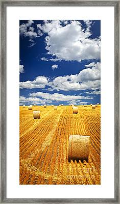 Farm Field With Hay Bales In Saskatchewan Framed Print by Elena Elisseeva