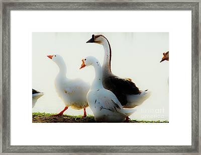 Farm Geese Framed Print by Lynda Dawson-Youngclaus