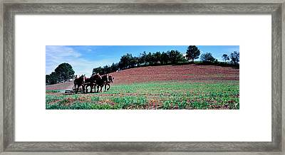 Farmer Plowing Field With Horses, Amish Framed Print by Panoramic Images