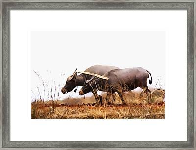 Farmer Plowing Terraced Rice Fields 2 Framed Print by Lanjee Chee