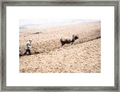 Farmer Plowing Terraced Rice Fields 4 Framed Print by Lanjee Chee