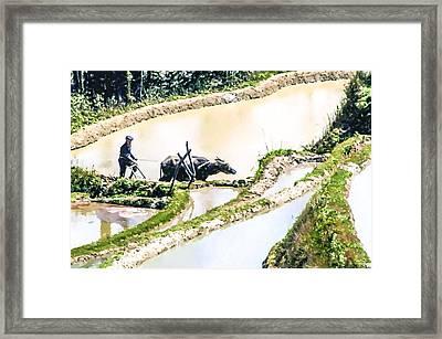 Farmer Plowing Terraced Rice Fields Framed Print by Lanjee Chee