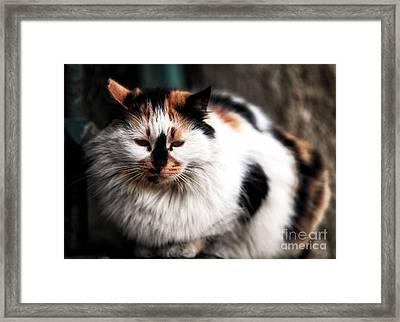 Fat Cat Framed Print by John Rizzuto