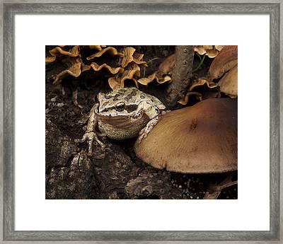 Fat Frog Framed Print by Jean Noren