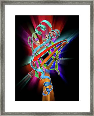 Fatty Acid Binding Protein 9 Molecule Framed Print by Laguna Design