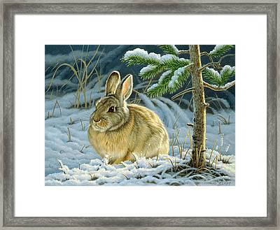 Favorite Place - Bunny Framed Print by Paul Krapf