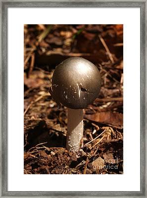 Fawn Mushroom Pluteus Cervinus Framed Print by Susan Leavines