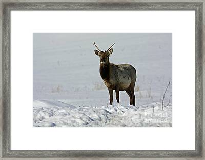Fearless By Nature Framed Print by Inspired Nature Photography Fine Art Photography