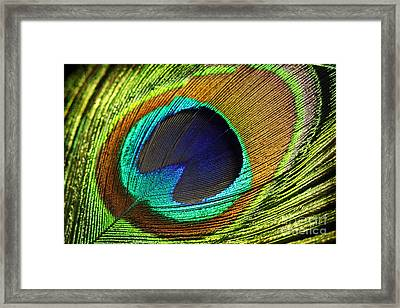 Feather Framed Print by Mark Ashkenazi